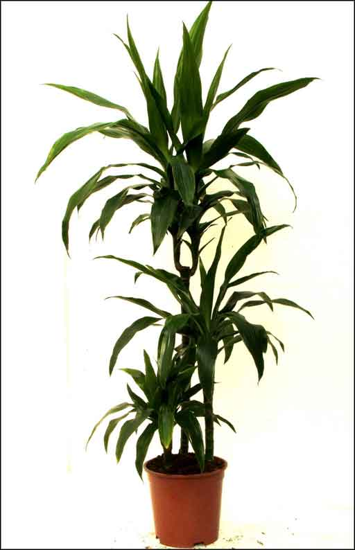 large house plants green indoor plants home