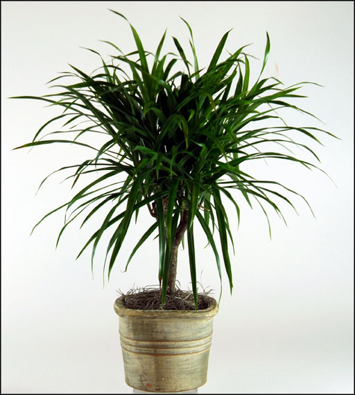 Indoor plants low light - Best plants for indoors low light ...