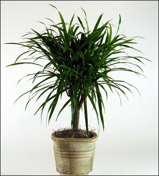 Indoor Plants Low Light